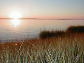 Marsh grass and bay sunrise